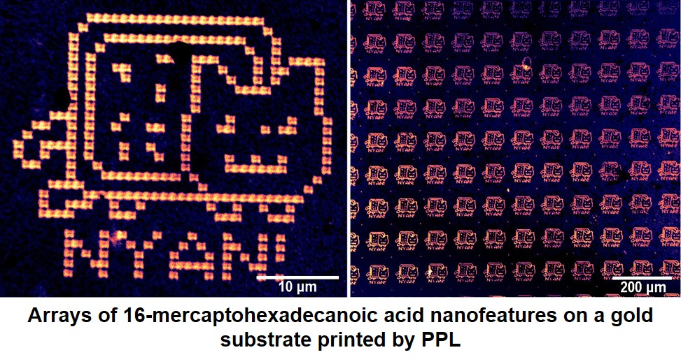 AFM Images of arrays of 16-mercaptohexadecanoic acid nanofeatures on a gold substrate printed by PPL